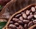 Il cacao: inizia ad essere dolce