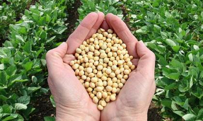 Soybeans: I° TARGET RAGGIUNTO