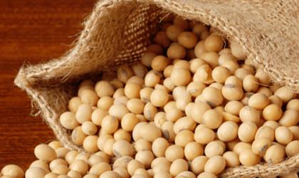 Soybean: focus futures Novembre 2015