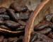 Cocoa: focus futures Settembre 2015