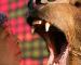 Death Cross: Mercati a rischio inversione di lungo periodo