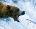 Bear claw: fine del mercato rialzista