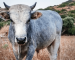 Feeder Cattle: ripartiamo dalle carni