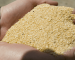 Soybean Meal: opportunità ribassiste