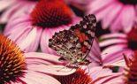 GUIDA ALLE OPZIONI: la Butterfly