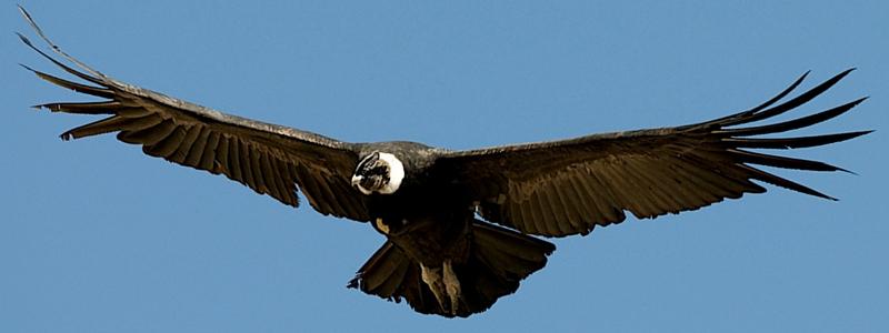iron condor