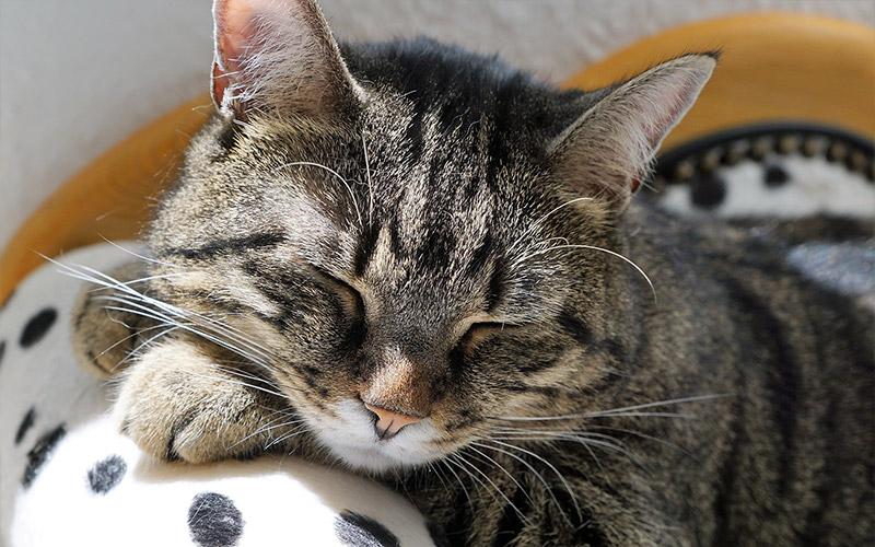 benefici pausa gatto