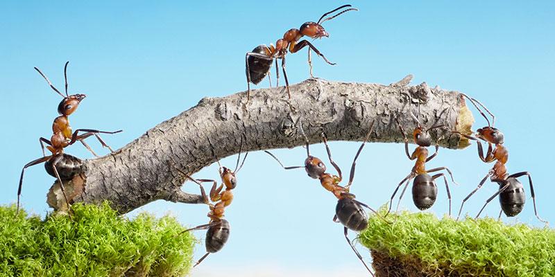 Reti di imprese: cosa sono e perché convengono?