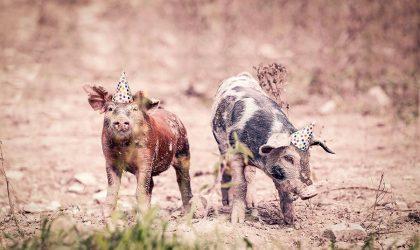 Sarà festa sui mercati con la carne di maiale?