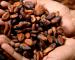 Cacao: quanto vale l'analisi fondamentale?