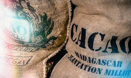 Future cacao: scheda tecnica della commodity